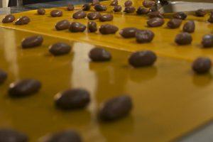 خرما شکلات جنوب